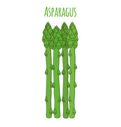 green asparagus cartoon flat style vector image