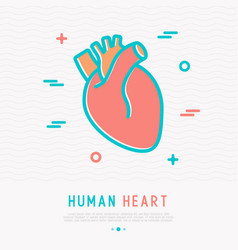 Human heart thin line icon vector