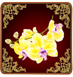 orchid phalaenopsis stem with golden flowers vector image