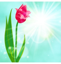 Spring card background with red tulip vector