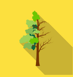 tree half full of green leaf and half dry icon in vector image
