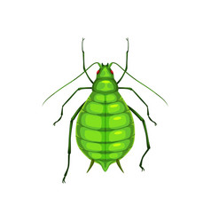 Aphid insect parasite bug pest control greenfly vector