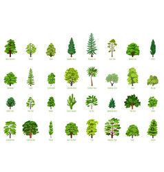 Big cartoon set with trees isolated vector