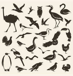 birds big collection stylized silhouettes vector image
