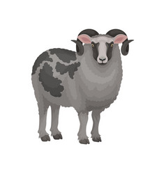 Detailed flat icon of male sheep ram with vector