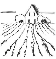 Hand made sketch of vineyard landscape vector