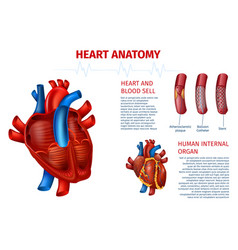 Human heart anatomy blood cell realistic banner vector