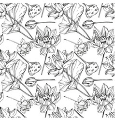 Lotus floral botanical flowers black and vector