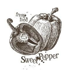 pepper logo design template fresh vector image