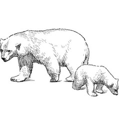 White bear with cub vector