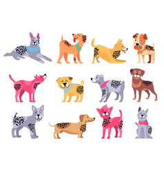 domestic dogs of pure breeds big set vector image