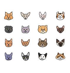 Cats faces breeds set contour sketch vector