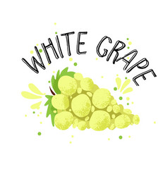 hand draw white grape yellow vector image