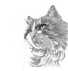 Head of a grey cat vector