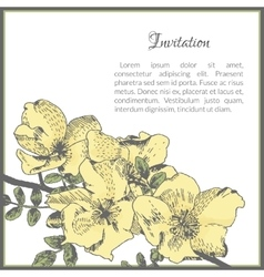 Invitation card template with dog-rose flower vector image