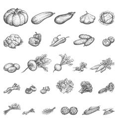 sketch set of vegetables vector image