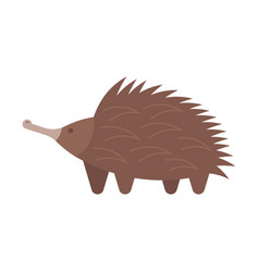 flat style of echidna vector image