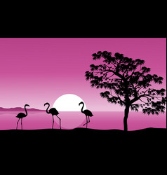 collection flamingo at sunset background vector image