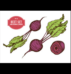 Collection hand drawn colored beet vector