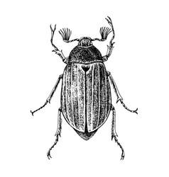 hand drawn maybug vector image