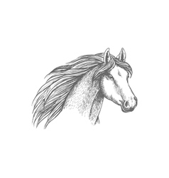 Horse head sketch of purebred arabian mare vector image