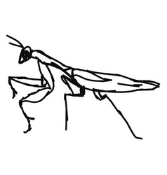 Mantis drawing on white background vector