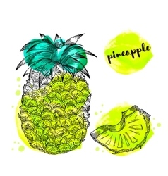Pineapple fruit with watercolor splashes vector