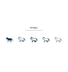 Pit bull icon in different style two colored vector