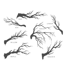 set of dried branches of trees vector image