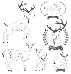 set vintage deer emblems labels logo vector image