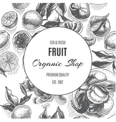 sketch background fruit citrus - bergamot vector image