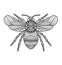 beetle hand drawn vector image