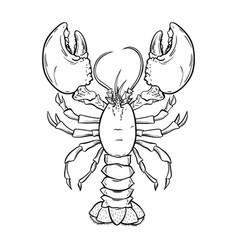 Crayfish lobster hand drawn contour vector