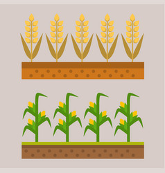 Farm harvesting field agriculture vector
