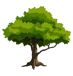 Green tree for you design vector