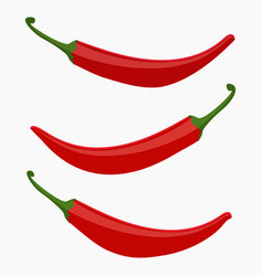 red hot chili vector image