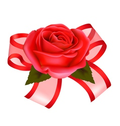 Rose with gift vector