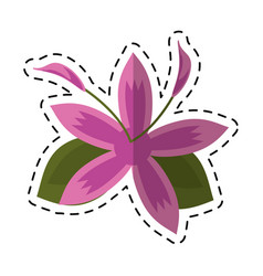 Cartoon flower daylily beautiful flora vector