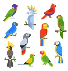 Cartoon parrots set and parrots wild animal birds vector