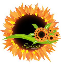 sunflower spring season icon decoration vector image