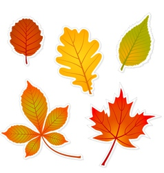 autumn leaves stickers vector image vector image