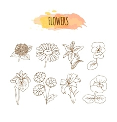 Hand Drawn Flower Set Floral vector image