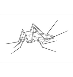 mosquito sketch vector image