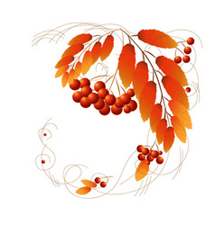 autumn red berries vector image