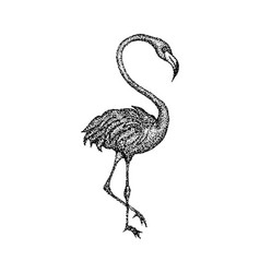 dotwork pink flamingo vector image