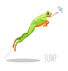 frog jumping to catch fly isolated on white icon vector image