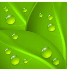 Green background with leafs and drop of dew vector