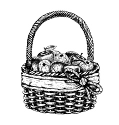 Hand drawn basket with apples sketch vector image