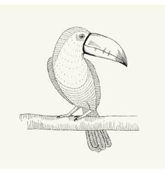 hand drawn toucan bird on the vector image