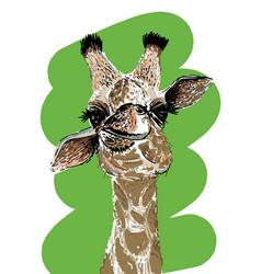 portrait a funny giraffe vector image